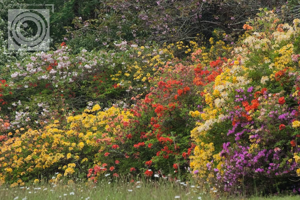 Photos de jardin en Bretagne - A travers l\'objectif